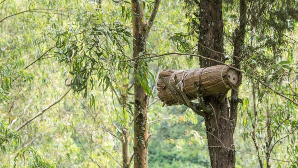 Apiculture et ruches rwandaises traditionnelles - La Vie Re-Belle