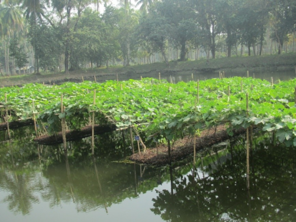 Jardins flottants du Bangladesh - La Vie Re-Belle